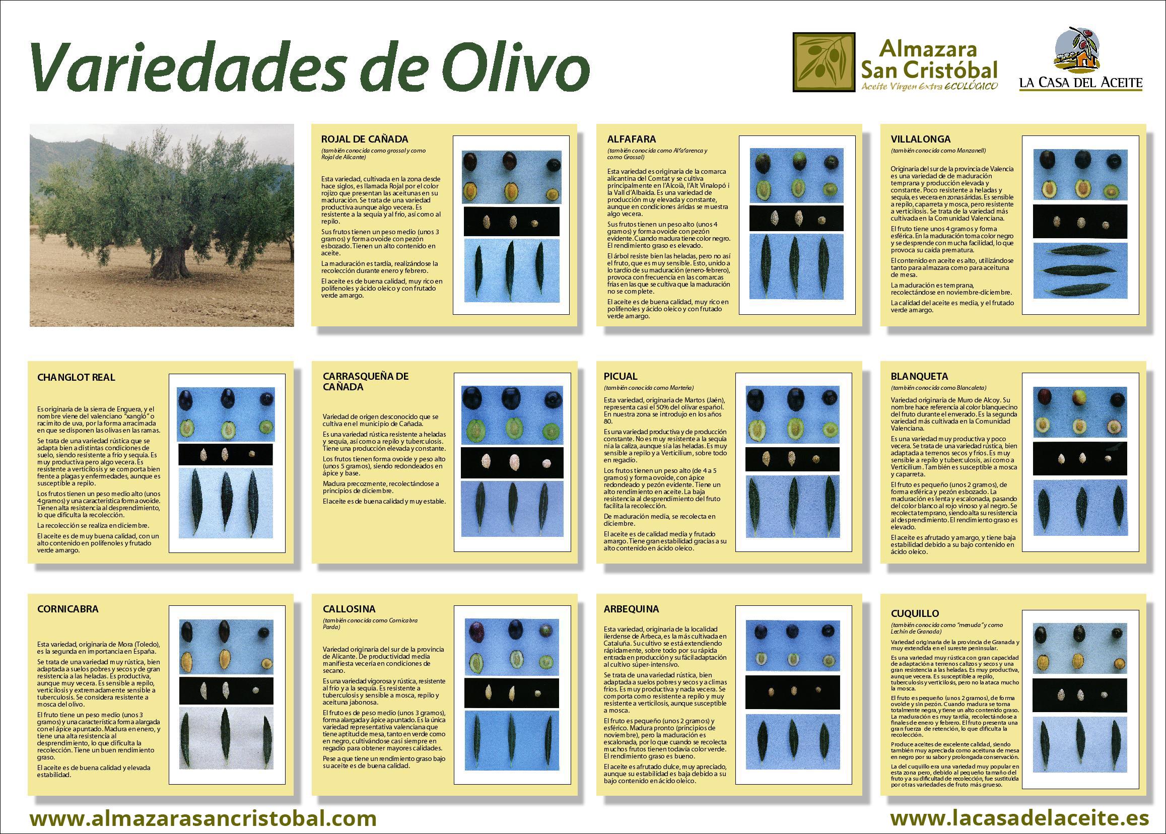 variedades-de-olivo